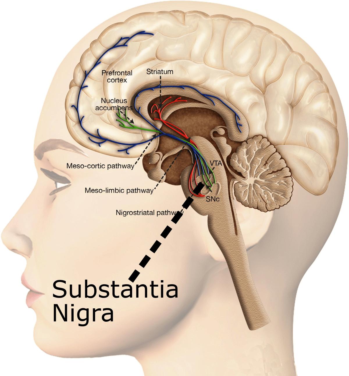 SubstantiaNigra5
