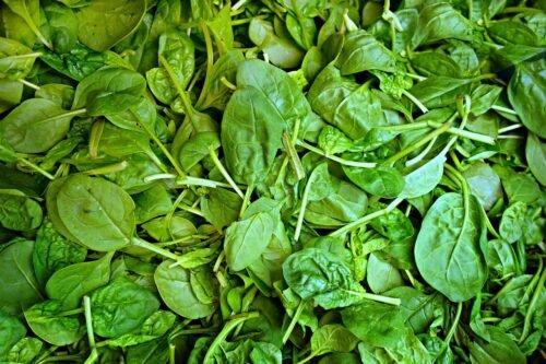 spinach 1522283 1280